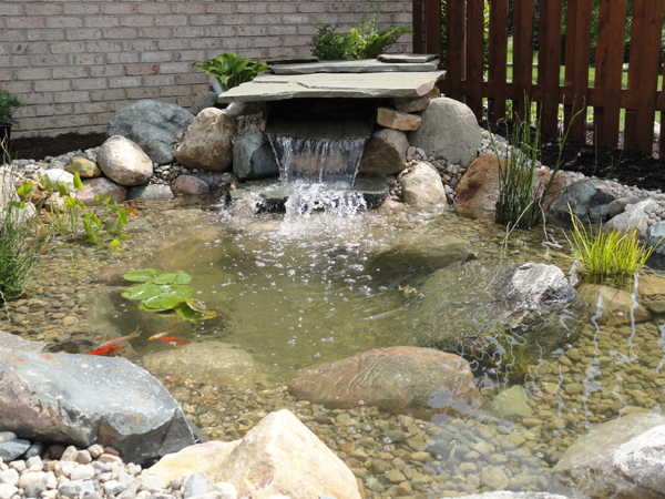 Small indoor koi pond house of fishery lovers for Small fish pond